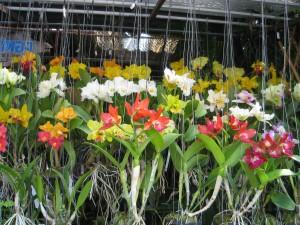 Thelwet flower market in Bangkok