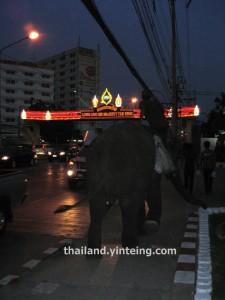 Elephant at Nothaburi province Bangkok Thailand