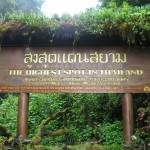 Doi Inthanon ดอยอินทนนท์- highest peak in Thailand