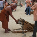 Tiger Temple in Kanchanapuri | Closed down due to controversy