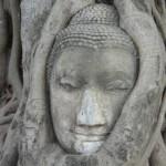Iconic Buddha head statue at Wat Mahathat Ayutthaya วัดมหาธาตุ อยุธยา