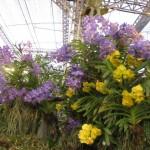 Chiangmairoyalflora12