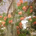 Chiangmairoyalflora13