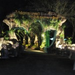 Chiangmairoyalflora17