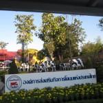 Chiangmairoyalflora6