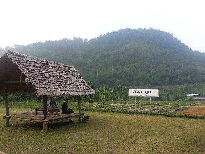 Napa Bhupa ไร่นภภูผา accomodation Thailand