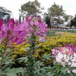 Visit highlands during November to January- beautiful blooms