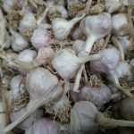 Garlic from Thailand