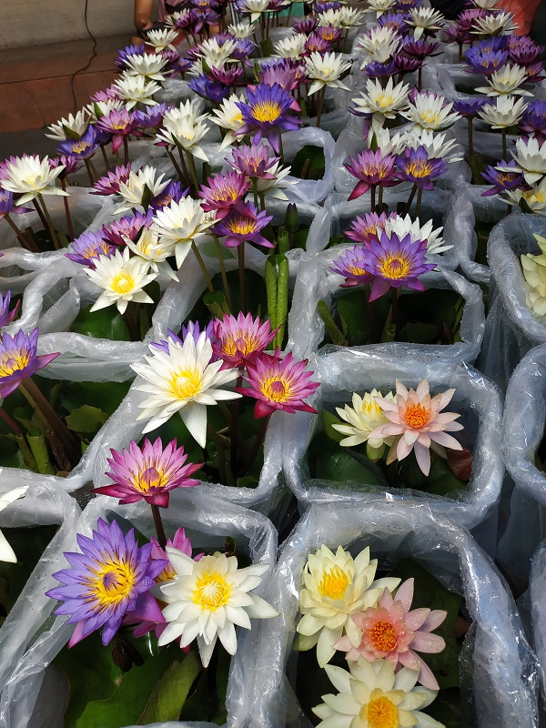 Lotus flower sold in market