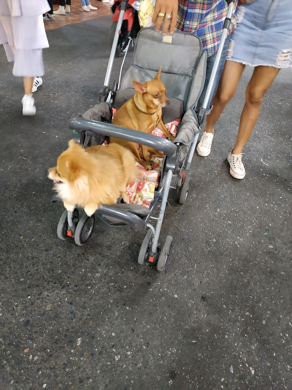 Dogs on a baby stroller