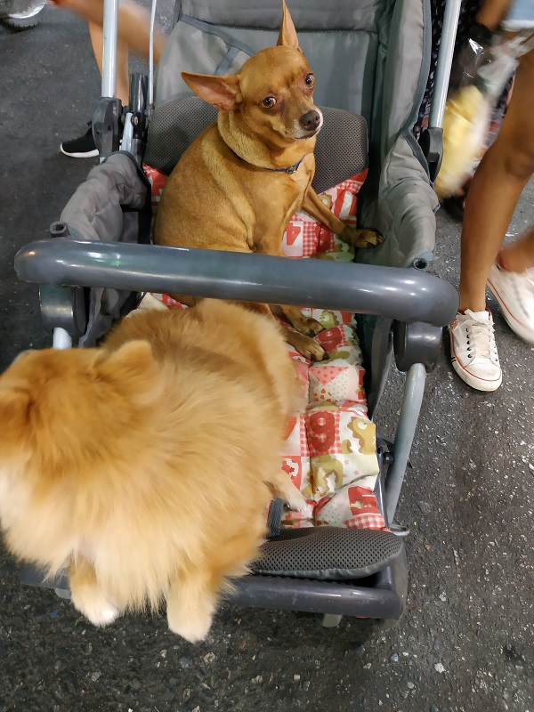 dogs on baby stroller