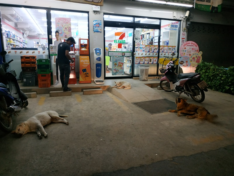 Dogs guarding 7 Eleven